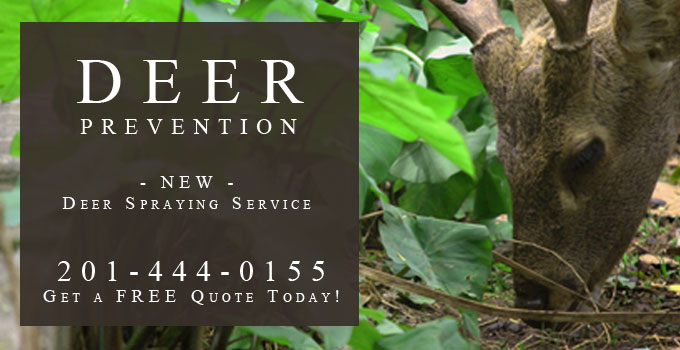 Deer Spraying Service And Deer Resistant Products